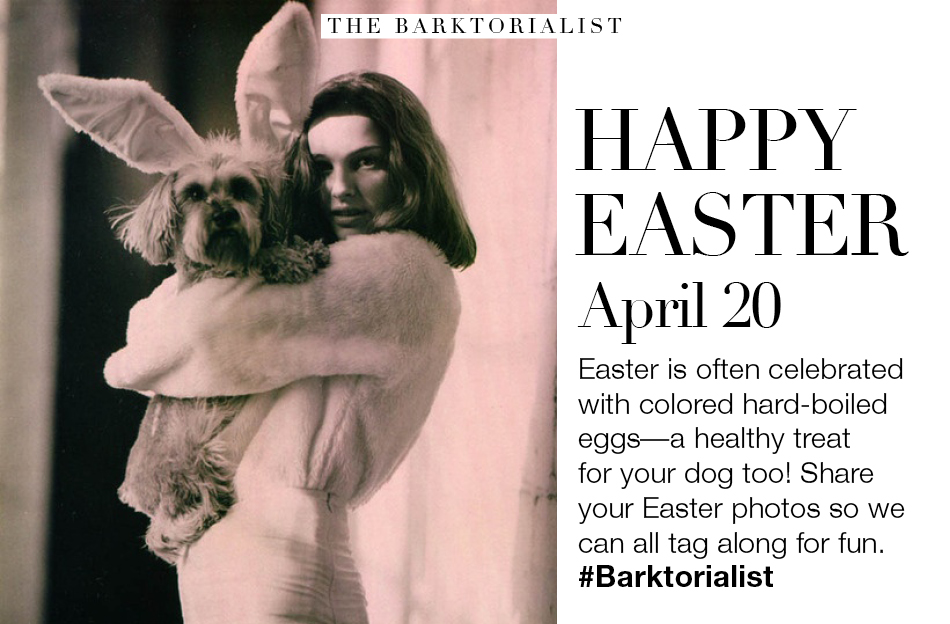 Tamara Parisio writes for THE BARKTORIALIST